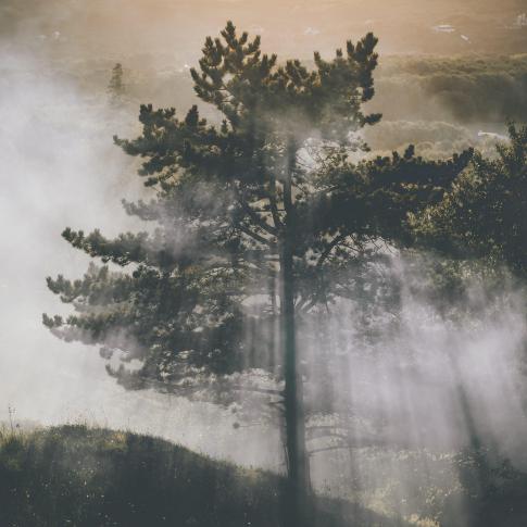 Solo tree - Nature Landscape